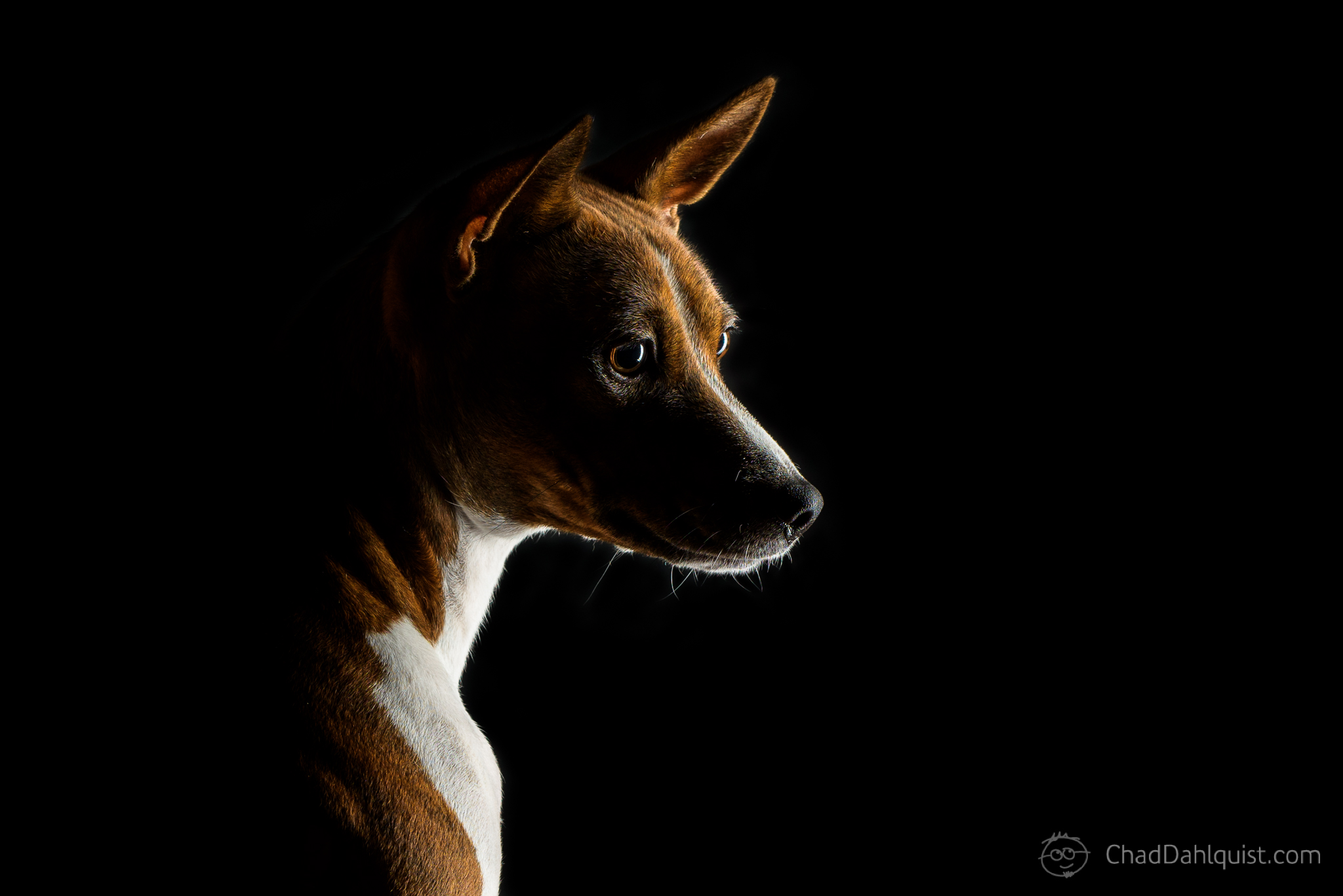 Dog Photography - Chad Dahlquist Photography