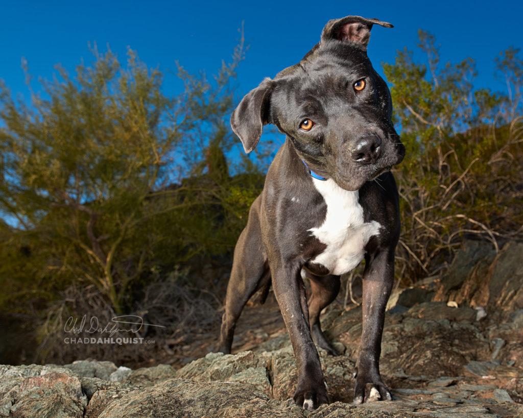 Pet Photographer Chad Dahlquist