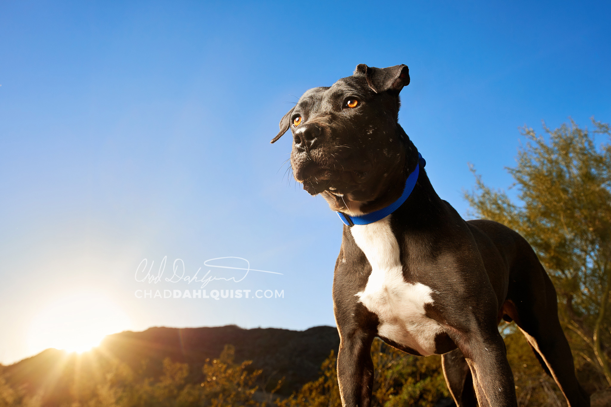 Chad Dahlquist Photography - Pets